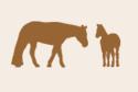 logo-pozzolifarm